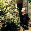 緑木に鈴子さん