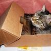 日本からタイへ届いた郵便物の関税&受け取りについて。