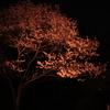 【画像あり】わざわざ春の京都に一人で出かけて花見をしようとしている君の為に教えたいスポットがある。