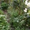 今朝の庭から・・・シュウメイギクとキンカン
