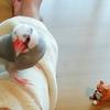我が家の文鳥とハムスター/粘土アクセサリー(ロバ)が完成しました☆
