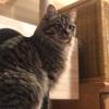 『ルー』という猫の鳴き声