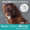 【VICTORY!!!】 Gucci がリアルファー廃止を発表!