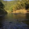 振草川に鮎釣りへ行ってきました!