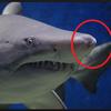 海でサメに襲われた時の対処法