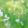 【日記】草が伸びてきたのと虫の話とすごい鼻がむずがゆい話