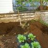 リンゴ2本とプルーン1本植えました!