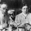 トルストイの妻ソフィア 『戦争と平和』完成への貢献と幸福ではない結婚生活