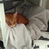 【手作り猫グッズ】猫用ベッド&テントを先日作成しました