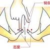 腎マッサージ