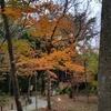 <御殿場 紅葉情報>秩父宮記念公園の紅葉ライトアップ