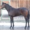 リリサイドの17の馬名決定その名はリリレフア