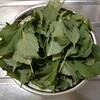 青じそジュースを作る。絞りかすの葉は大葉味噌に