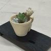 動物鉢と多肉植物