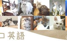 祝60回★ネコ英語「2月22日はネコの日」