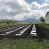 毛豆の畝作り 畑の様子