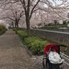 4M17days:桜満開の季節に