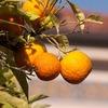 オレンジの使い方とは?実用例を紹介!