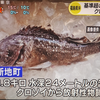 (海外の反応) [特派員レポート] 2年ぶりに捕まった「放射能クロソイ」…福島原発、どういうこと?