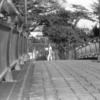 Photo No.416 / ある日の散歩道