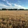 大規模農業でも持続可能性の追求は可能か?