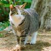 2017年前半に出会った野良猫さん達 前編