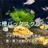 水槽バックスクリーン!タナゴや金魚に合う色は青・黒?比較してみた