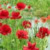 ごく最近の出来事と庭の花