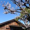 板谷波山記念館の夫婦窯と御神札
