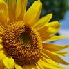 太陽の花 | LEICA 12-60mm