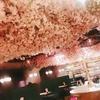 店内でお花見! ESOLA新宿の花見ワインバル♪♪