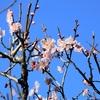 季節の花(令和三年一月)