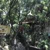 山の上にあるお寺へ 頂山古寺Chùa cao編 タイ寺3