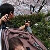 子供たちの春休み。なんだか忙しくて満開の桜を見逃した(T-T)