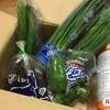 【ふるさと納税】奈半利「ちょこっと野菜」3月分