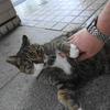 9月後半の #ねこ #cat #猫 その3