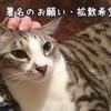 NeCoねこ日記~広~い北海道