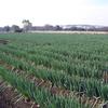 援農という大切な活動のご紹介