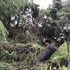 ユニバーサルスタジオの台風21号の被害