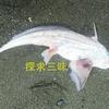 【TOCANA】【緊急レポート】幻の深海魚「ゴーストシャーク」(ギンザメ?)が湘南の海岸に出現か? 2カ月以内に周辺で大地震の可能性も