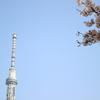 浅草・隅田公園の桜まつりで桜とスカイツリーと墨田川とビールを楽しむの巻