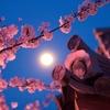 3/27 京都桜探訪