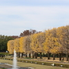 昭和記念公園の紅葉。