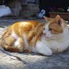 【江ノ島の猫】島の神社をめぐりながら猫探し!