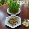 大麦の種まき