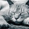 熟睡できるって、それだけで才能!!睡眠の主導権を握って、眠ることで癒されよう!