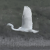(LUMIX TZ85 レビュー)4K Photoと野鳥