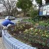 3月1日花壇の手入れ