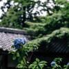 (snap)梅雨の鎌倉散歩 XF56mm F1.2 R試し撮り