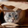 ネコは自分の名前を認識しているか